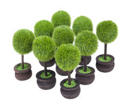 Group of Potted Trees Stock Photography