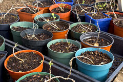 Group of Potting Plants Stock Images