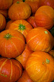 Group of Pumpkin Stock Images