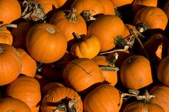 Group of pumpkins Stock Photography