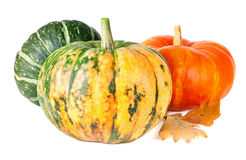 Group of pumpkins Royalty Free Stock Images