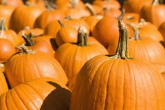 Group of pumpkins. Royalty Free Stock Photography