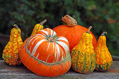 Group of pumpkins on the background of green leaves Stock Image