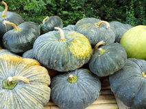 The group of pumpkins Stock Photos