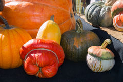 Group of pumpkins in different curious shapes and colors Stock Photo