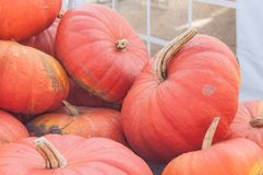 group of pumpkins for halloween Stock Image