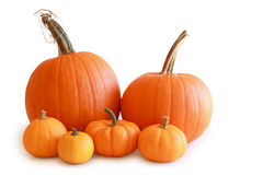 Group of pumpkins isolated on white Stock Images