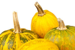 Group of pumpkins isolated on a white background Stock Photos