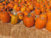 Group of Pumpkins Stock Images
