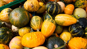 A group of pumpkins on the market Stock Image