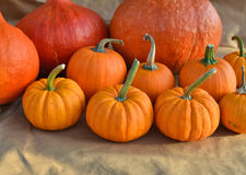 Group of pumpkins Royalty Free Stock Photography