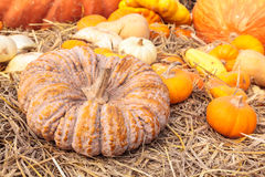 Group of pumpkins on straw Royalty Free Stock Photo