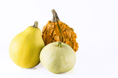 Group of pumpkins Royalty Free Stock Image