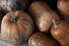 Group of pumpkins on a wooden table Stock Images