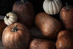 Group of pumpkins on a wooden table Royalty Free Stock Photo