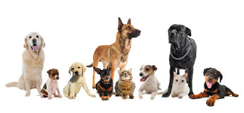 Group of puppies and cats. Group of dogs, puppies and cats on a white background Royalty Free Stock Photo