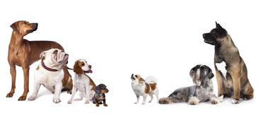 Group of puppies Stock Images