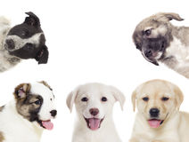 Group of puppies looking Stock Images