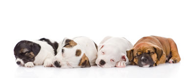 Group of puppies sleeping. isolated on white background Royalty Free Stock Photo