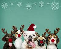 Group of puppies wearing Christmas costumes stock image