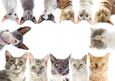 Group of cats royalty free stock photo