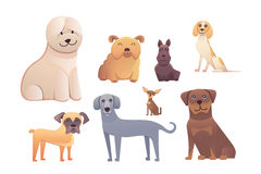 Group of purebred dogs. Illustration for dog training courses, breed club landing page and corporate site design Royalty Free Stock Images