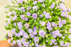 Group of purple flower. Group of small purple and green flower for graduated gift royalty free stock image
