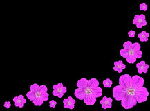 Group of Purple Flowers Isolated on Black. Arranged Bunch of Five Petal Purple Flowers Isolated on Black Background Stock Photos