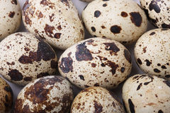 Group of quail eggs Stock Images