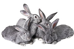Group of rabbits Stock Images