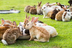 Group of rabbits Stock Photo
