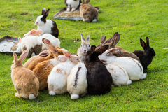 Group of rabbits Royalty Free Stock Photography