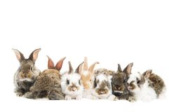 Group of rabbits in a row Royalty Free Stock Photography