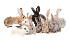 Group rabbits. On a white background Royalty Free Stock Image