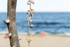 Group of rapan shells linked via rope on a tree as a decoration and sandy beach with tourists in background.  stock photography
