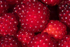 The group of rapsberry fruit in detail Royalty Free Stock Photography