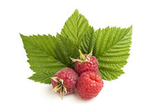 Group of raspberry with leaf on white background ID 57042335. Group of raspberry with leaf on white background Royalty Free Stock Images