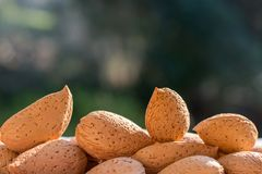 Group of raw almonds,  background. Main ingredient for nougat Sicilian. Group of raw almonds, with skin and rind, copy space. Main ingredient for nougat Sicilian royalty free stock photography