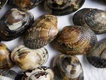 Group of raw clams. Texture Stock Photos