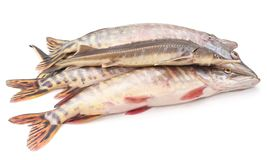 Group of raw fish. Group of raw fish on a white background Royalty Free Stock Images