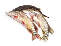 Group of raw fish. Group of raw fish on a white background Stock Photo