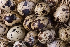 Raw quail eggs. Group of raw quail eggs on wooden background Stock Photos