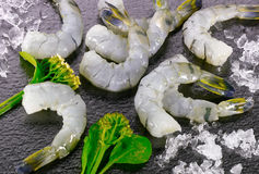 Group of raw shrimps Stock Image