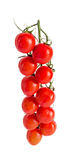 Group of red cherry tomatoes, bunch, vine,  close up, isolated o Royalty Free Stock Photo