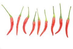 Group of red chilies Stock Image
