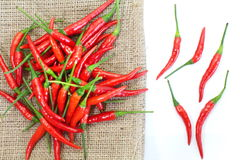Group of red chilies Royalty Free Stock Photos