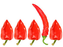 Group of red fresh pepper Royalty Free Stock Images
