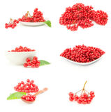 Group of red guelder rose berries Stock Photo