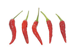 Group of red hot chilies isolated on white Royalty Free Stock Image