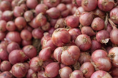 Group of red onion Stock Photography